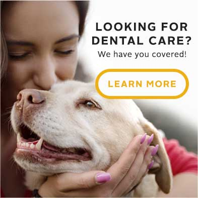 Looking for Dental Care? Learn More!